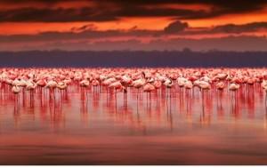 fenicotteri rosa al tramonto
