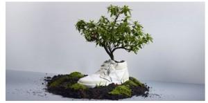 scarpa che germoglia