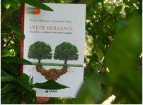 verde brillante libro