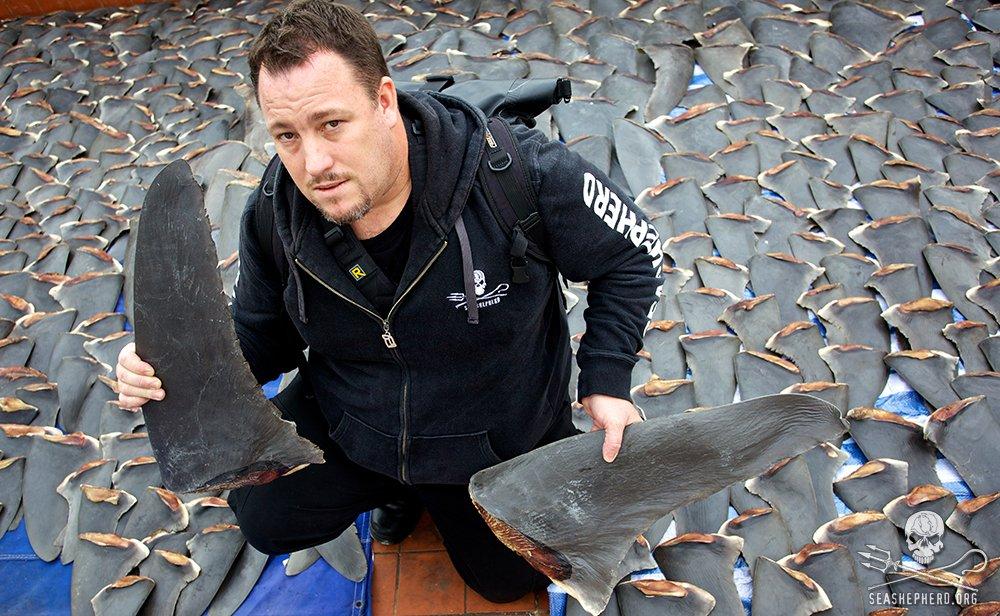 Il massacro degli squali