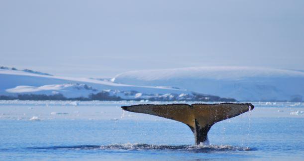 """Una parmigiana al Polo Sud, per """"Difendere l'Antartide per difendere la Terra"""""""