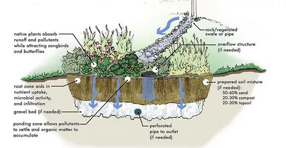 Rain gardens: Raccolgono e qualificano l'acqua piovana, contrastano le bombe d'acqua