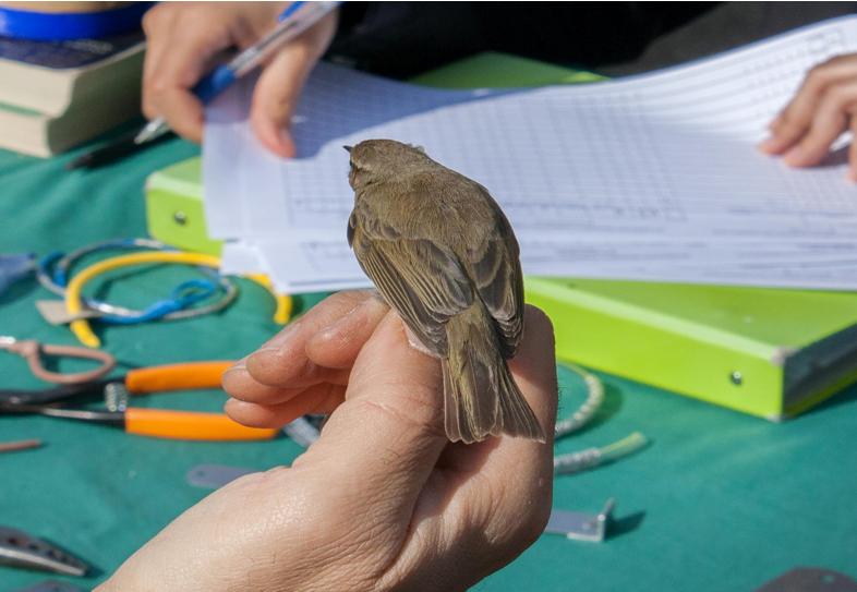 Alla scoperta dei piccoli migratori del Parco del Taro
