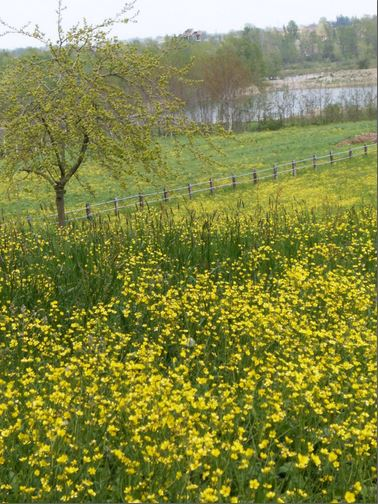 Esplosione di primavera a Vignale e scaloppine ai fiori di rosmarino