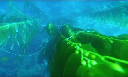 """In fondo al mare c'è una risposta alla """"resistenza antibiotica"""""""