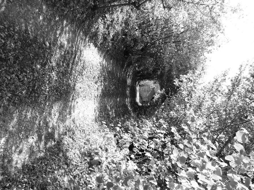 Sul sentiero per arrivare al Madone