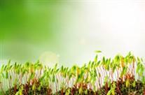 greengrowth (207 x 136)